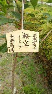 桜空(しらら)